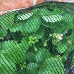 Anti hail net pond net