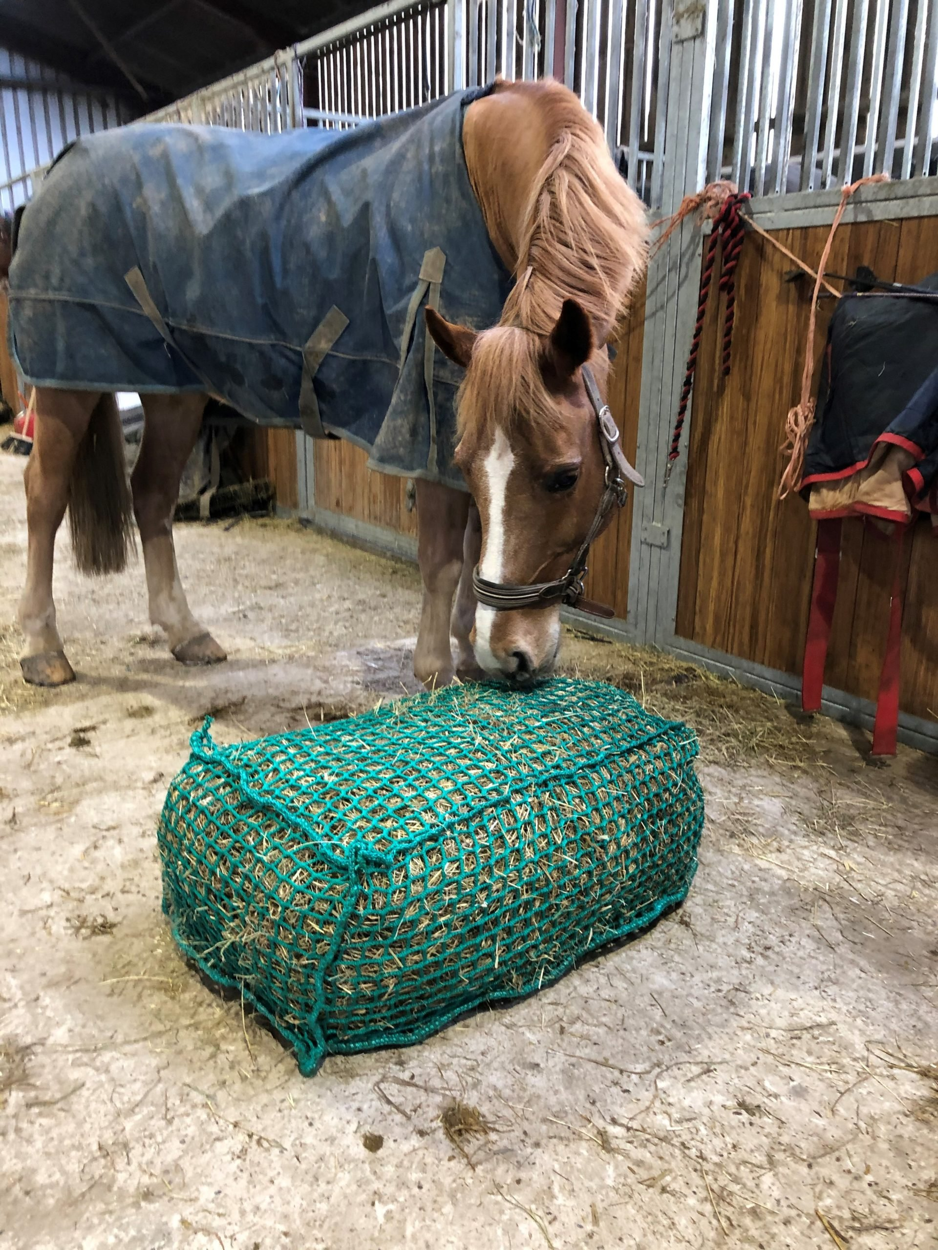 Slow Feed Standard Hay Bale