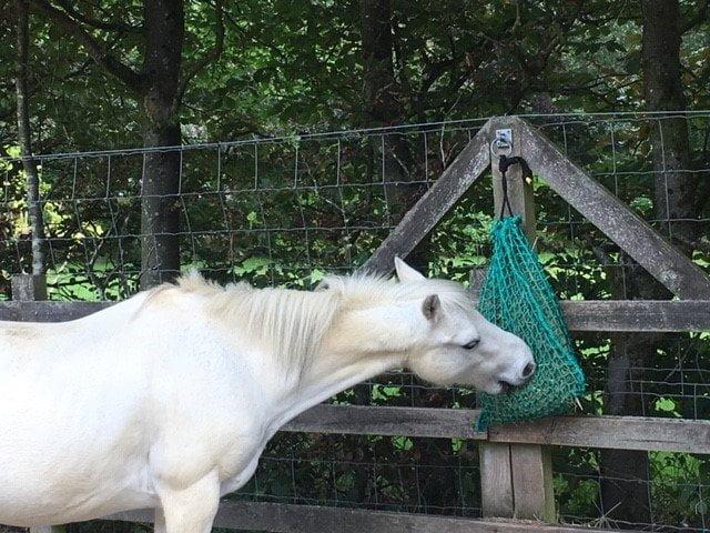 Pony slow feed